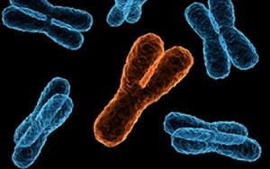 <b>Y染色体检测</b>